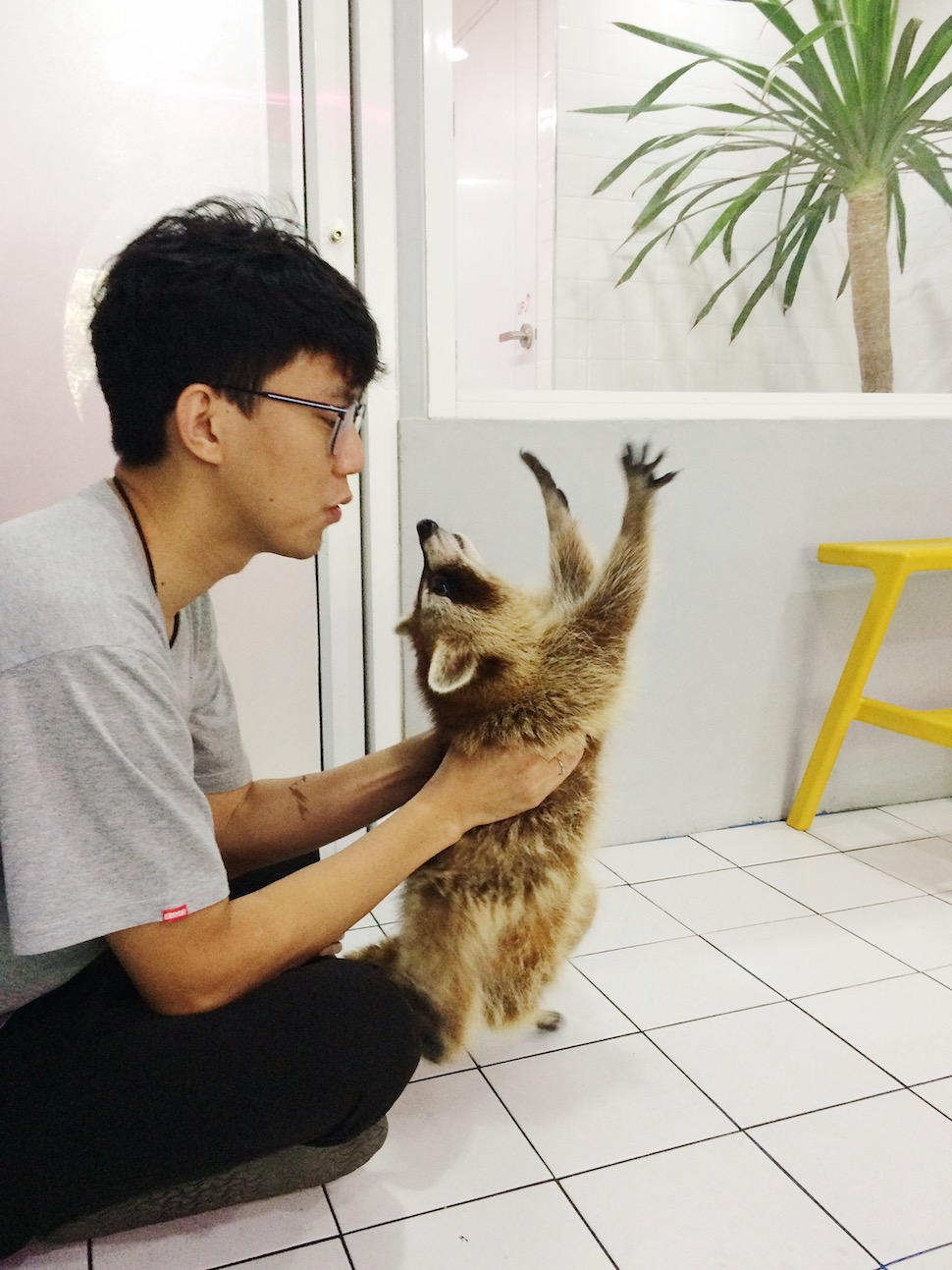 Pooltime Raccoon Cafe